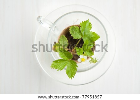 Top view blossom sprout of strawberry in glass cup on white table