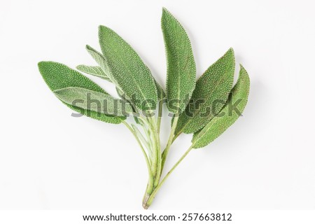 Top view - bundle of sage leaves on white background  - stock photo