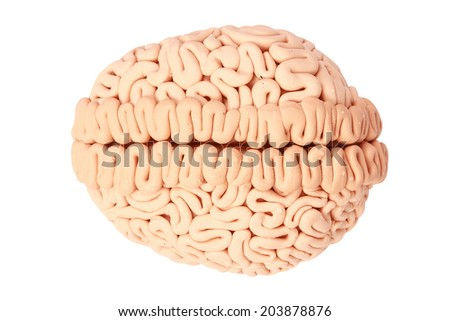 top view human brain handmade plasticine isolate on white background with clipping path - stock photo