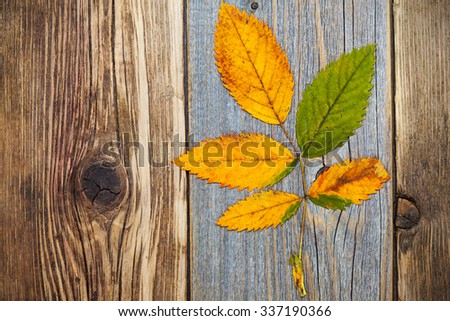 top view image of yellow-red autumn dry leaves on the surface of old textured boards - stock photo