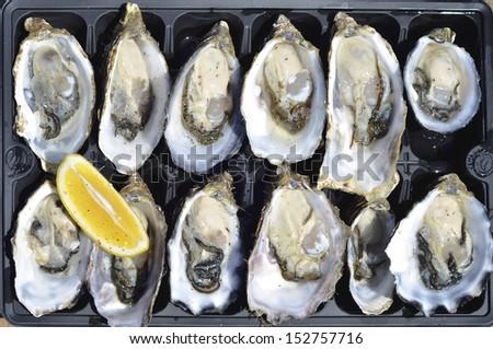 Top view of a dozen fresh oysters with lemon wedge at Kangaroo Island, Australia  - stock photo