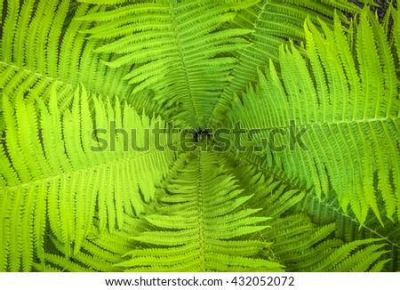 Top view of a garden fern closeup - stock photo