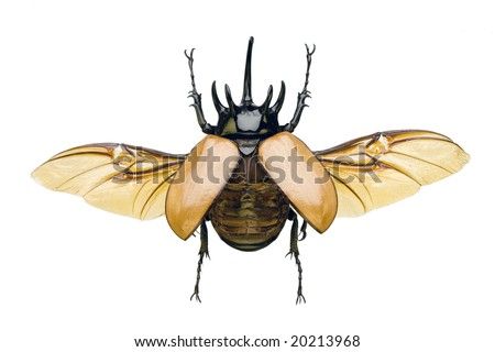 Beetle-wing Stock Images, Royalty-Free Images & Vectors ...