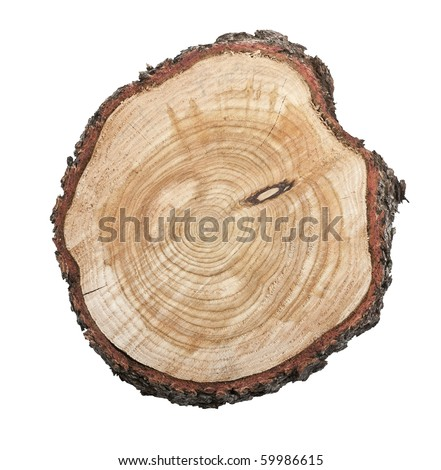 Top view of a tree stump isolated on white background - stock photo