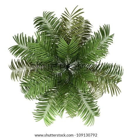 top view of areca palm tree isolated on white background - stock photo