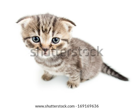 top view of cat kitten on white background - stock photo