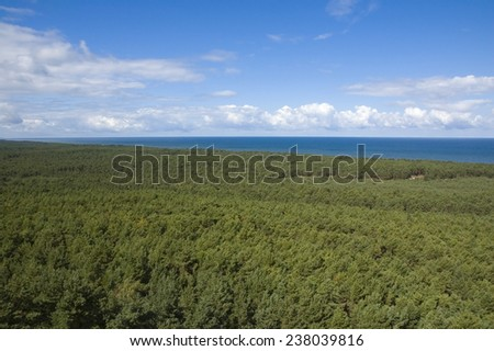 Top view of coniferous forest on the Baltic Sea coast, Poland - stock photo