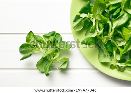 top view of corn salad, lamb's lettuce  - stock photo