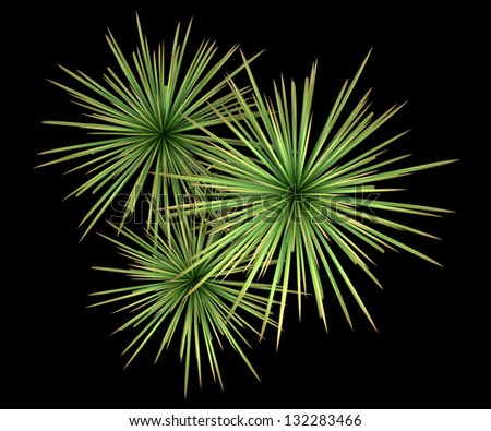 Pot Plant Top View Top View of Dracaena Plant in