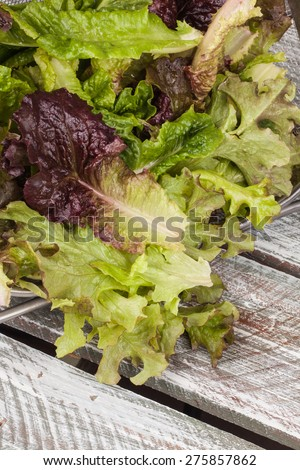 Top view of freshly harvest Lola Rosa lettuce, mustard greens, buttercrunch, and assorted lettuce on a weathered old barn wood table with space for writing - stock photo