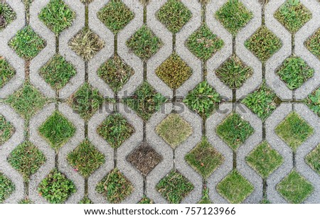 Top view of gray Paving stones with different grasses and wild herbs
