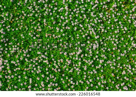Top View Green Grass Small White Stock Photo 226016548