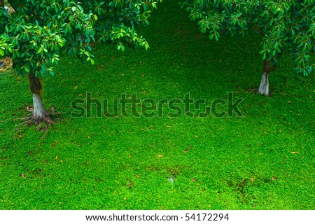 Top view of green lawn with tree.