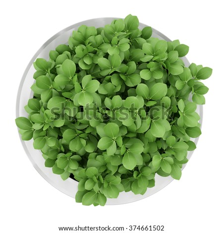 top view of houseplant in metallic pot isolated on white background - stock photo