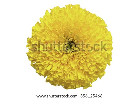 top view of marigold flower isolate on white background - stock photo