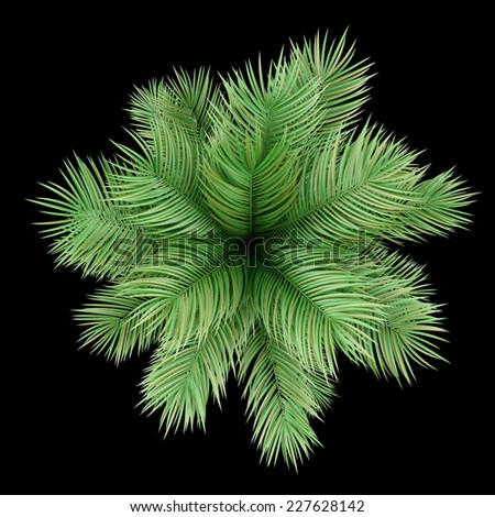 top view of potted palm tree isolated on black background - stock photo
