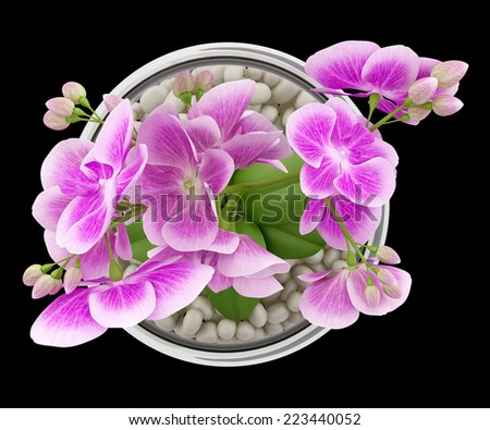 top view of purple orchid flower in glass vase isolated on black background - stock photo