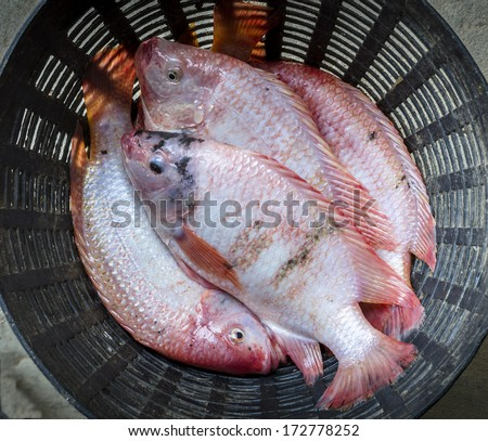 Top view of Red tilapia in the black basket - stock photo