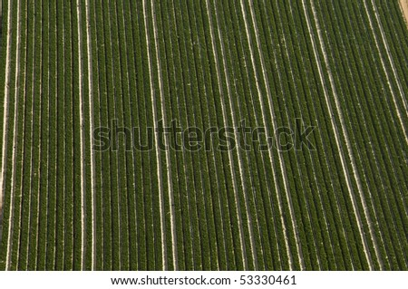 top view of strawberry  Field in Israel - stock photo