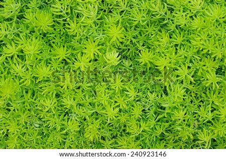 top view of succulent plants on the ground - stock photo