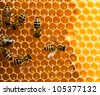 Top view of the working bees on honeycells. - stock photo