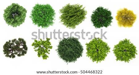 Top View Of Tree Collection Isolate On White Background For Landscape 3d Rendering