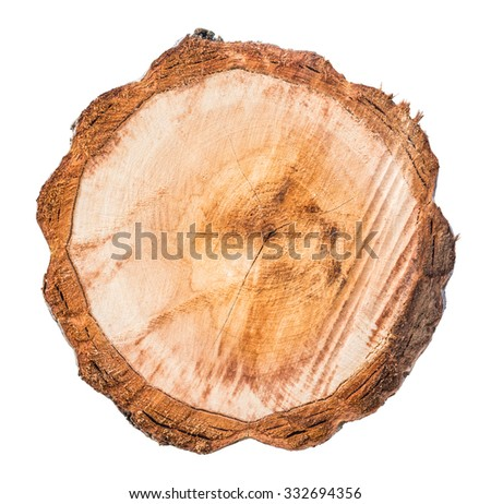 Top view of tree stump isolated on white background - stock photo