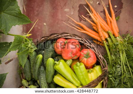 Top view on basket full of organic garden vegetables: cucumbers, paprika, tomatoes and fresh carrots. Vitamins from own garden. Vegetables - healthy food and snack. Healthy eating concept. - stock photo