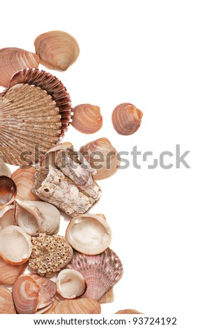 top view on sea shells and sponges isolated over vhite