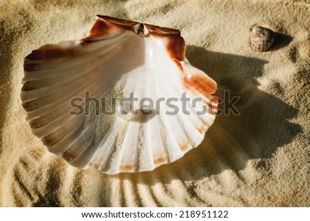 top view on white pearl in the beautiful seashell on sand  - stock photo