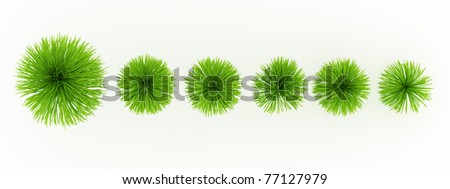 top view Ponytail palm isolated over white - stock photo