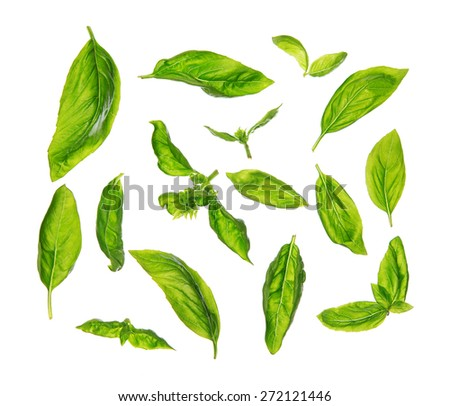Top view scattered fresh sweet basil leaves, isolated on white background. - stock photo