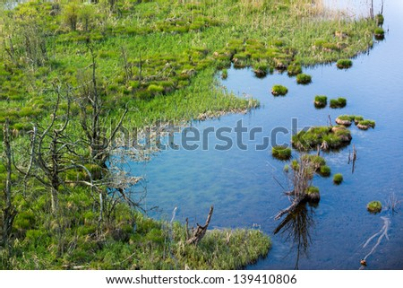 top view to swamp at lake with arid trees and grass - stock photo