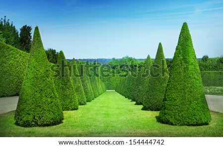 Topiary trees - stock photo