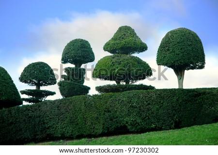 topiary trees - stock photo