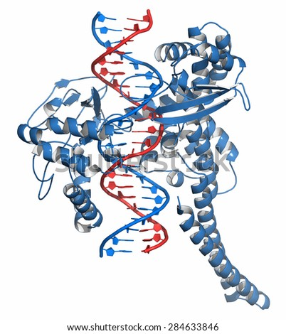 Topoisomerase I (topo I) DNA binding enzyme. Target of a number of chemotherapy drugs used against cancer. Cartoon representation. DNA red-blue; protein blue. - stock photo