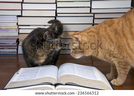 Torbie tortoiseshell Tabby Cat with Orange Tabby Cat over a book with piles of books in the background. Looking towards each other.  - stock photo