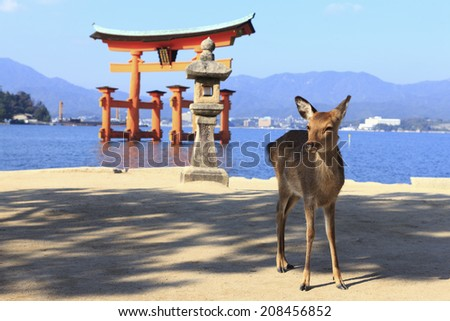 Torii Of Miyajima And Deer - stock photo