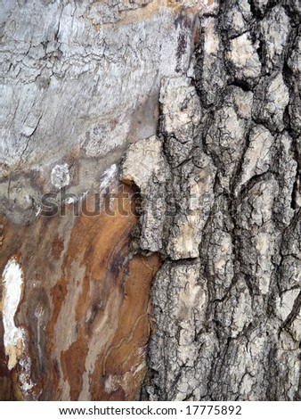 torn tree bark background texture