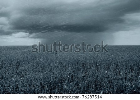 tornado over grain field in spring - stock photo