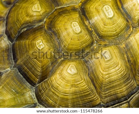Tortoise Closeup Details in an Indoor Setting - stock photo