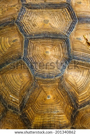 tortoise turtle shell texture detail. - stock photo