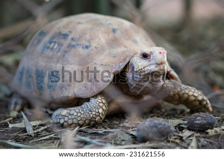 tortoises - stock photo