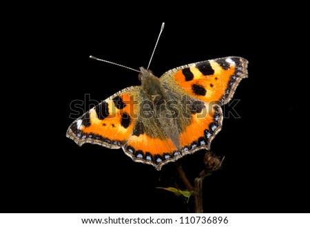 how to open a dead butterflies wings