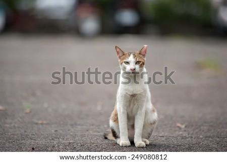 Tortoiseshell cat sitting and waiting in urban, Taiwan. - stock photo