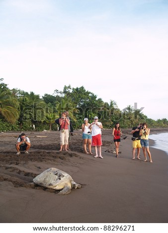 TORTUGUERO, COSTA RICA - AUGUST 18: Hundreds of tourist come every year to observe turtles dig their eggs in Tortuguero, on August 18, 2010 in Tortuguero National Park, Costa Rica - stock photo