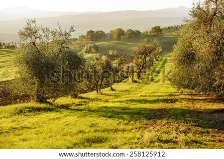Toscany landscape, Italy. Focus on the foreground - stock photo