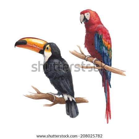 Toucan and parrot drawings - stock photo
