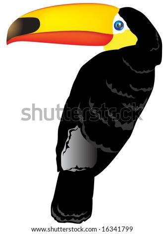 toucan bird vector illustration - stock photo