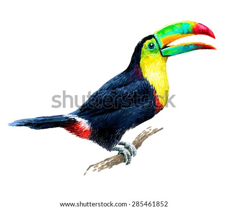 Toucan sitting on tree branch isolated on white background. Tropical birds. Drawn illustration. - stock photo